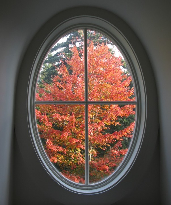 Windsong oval window and maple tree
