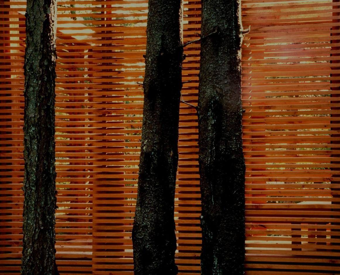 Spruce trees and sauna lattice